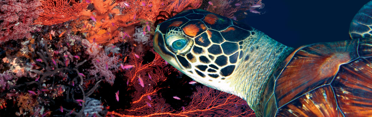 Website Case-Study: Coral Sea Dreaming